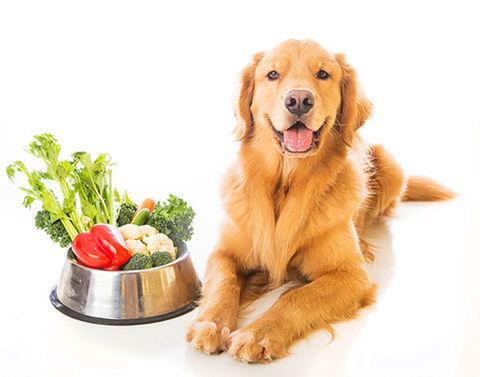 vegetarisches hundefutter ohne getreide. Black Bedroom Furniture Sets. Home Design Ideas